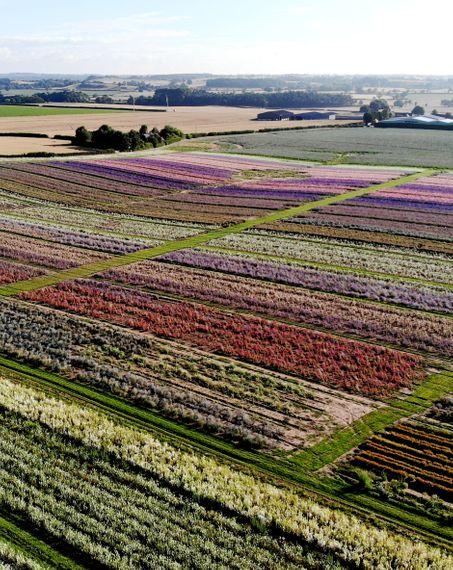 shropshire petals shropshire petals growing on the farm biodegradable petal confetti