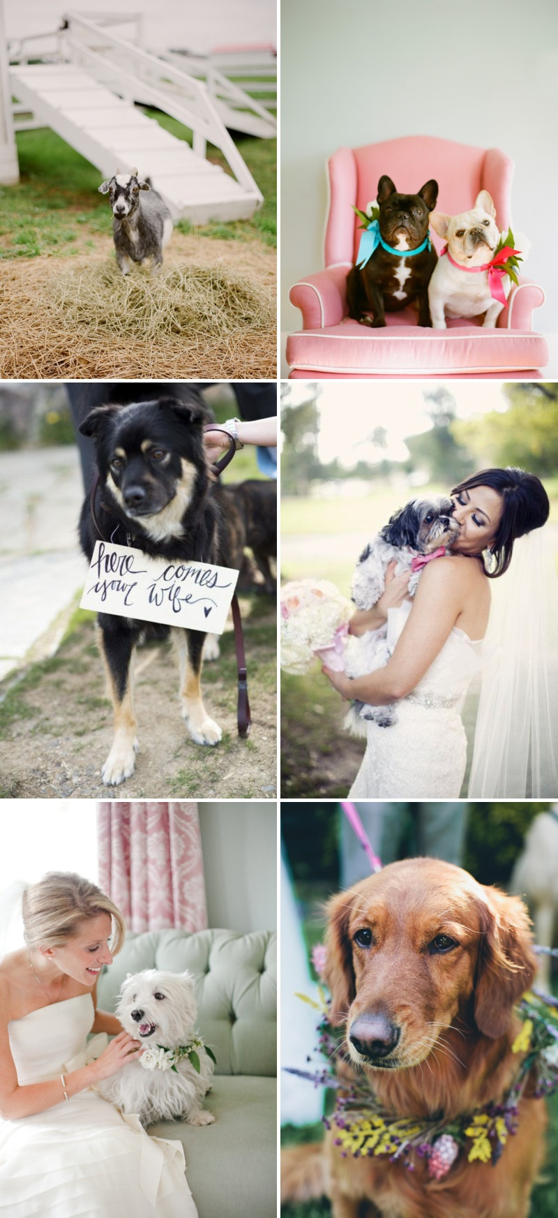 Horses, Dogs and Pets At Weddings Discussion Post 2
