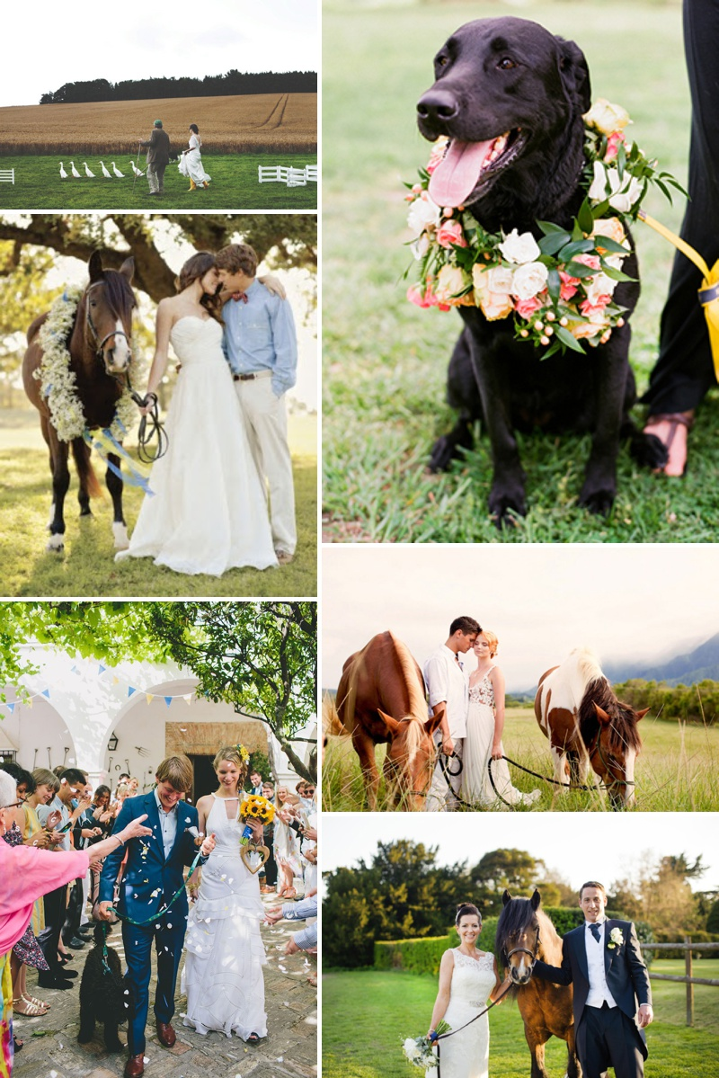 Horses, Dogs and Pets At Weddings Discussion Post 3