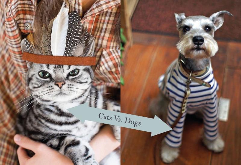 The Cat Or Dog Debate Book